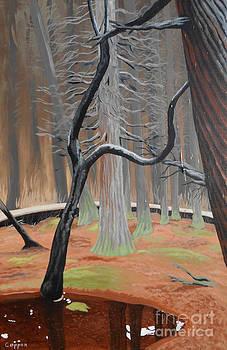 In the Atlantic White Cedar Swamp by Robert Coppen