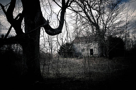 From The Woods by Off The Beaten Path Photography - Andrew Alexander