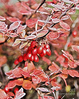 Frosted Berries by Fred L Gardner