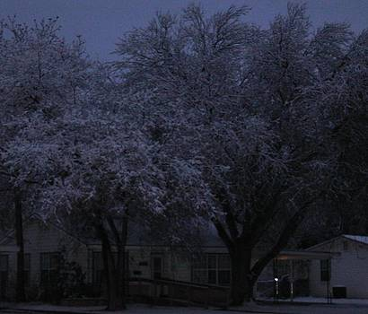 Frosted Trees by Heather Ann Myers