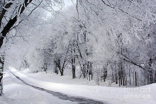 Frosted Trees Path by Tina Hailey