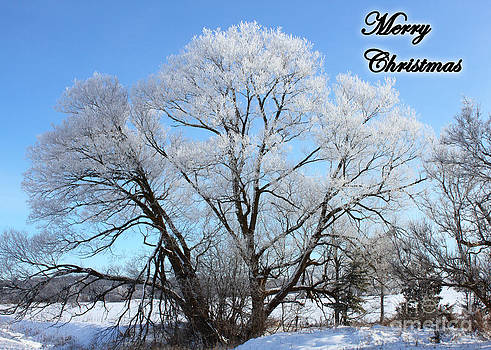 Frosted Willow Christmas Card by Deanna Wright