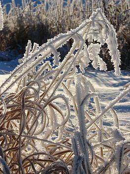 Frosty Feilds by K Walker