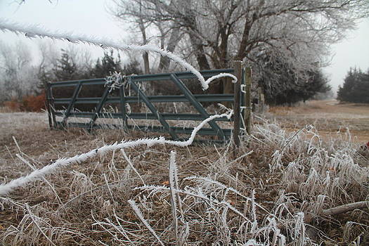 Frosty Fence by Alicia Knust