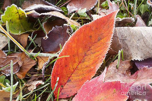 Jonathan Welch - Frosty Foliage