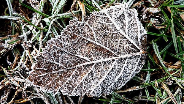 Frosty Leaf by Derek Sherwin