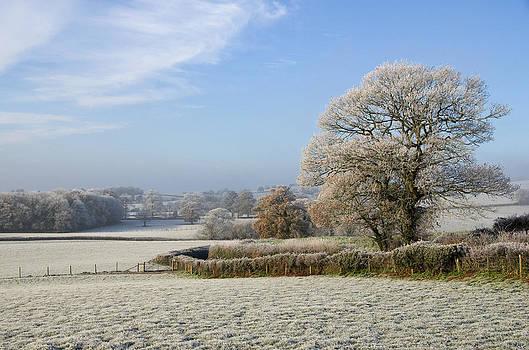 Frosty morning in Devon by Pete Hemington
