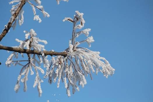 Frosty Morning by John Dart