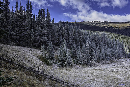 Frosty Pines by Tom Wilbert