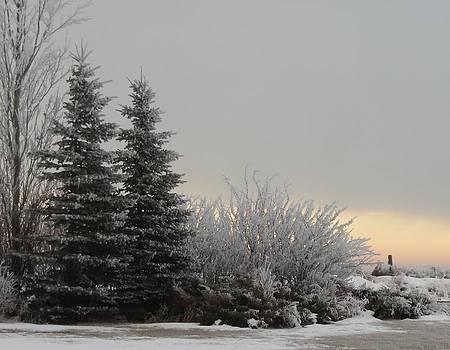 Frosty Sunrise 2 by Linda Koch