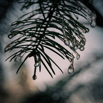 Frozen Beauty by Jen Baptist
