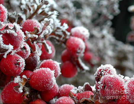 Frozen Crimson Close Up by Heidi Manly