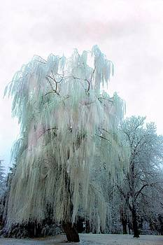 Frozen Fog by Myrna Migala
