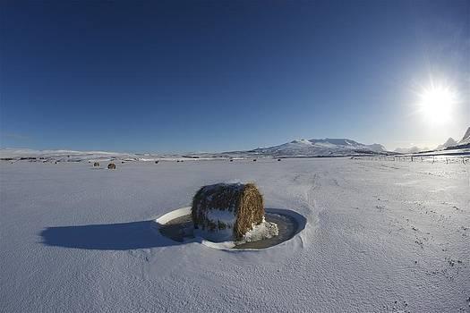 Frozen hay roll. by Erlendur Gudmundsson