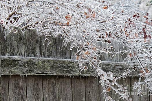 Frozen by Janet WAGSTAFF