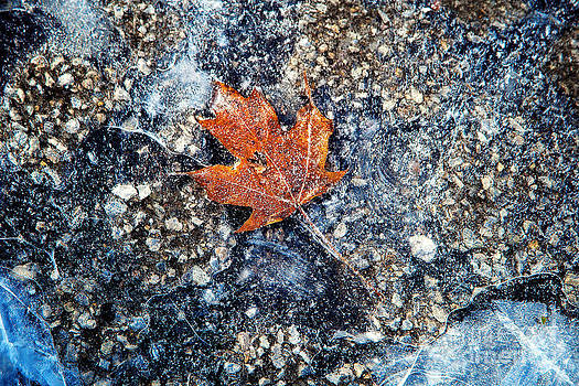 Frozen Leaf by Jeanette Brown