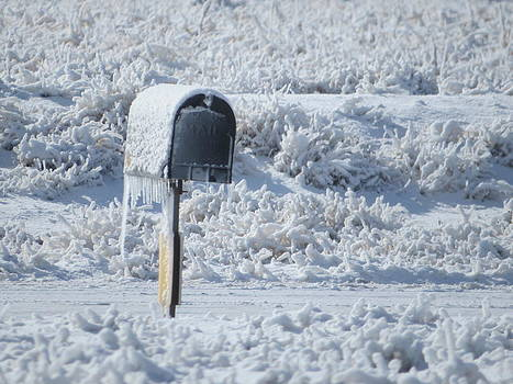 Frozen Mail Box by Suzy Pal Powell