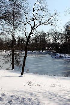 Carolyn Stagger Cokley - frozen pond2