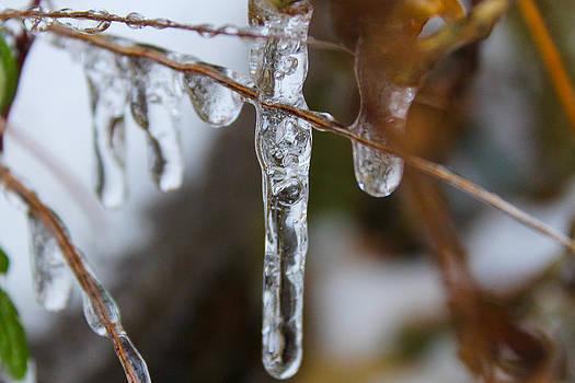 Frozen Purity by Hannah Miller