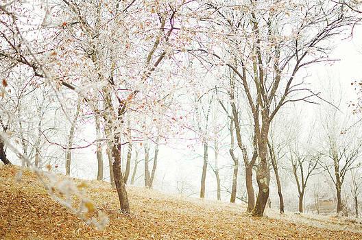 Frozen spring by Silvia Floarea Toth