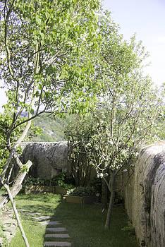 Teresa Mucha - Fruit Trees at Marksburg Castle