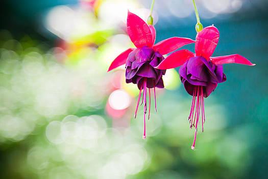 Fuchsia Bokeh by India Blue photos