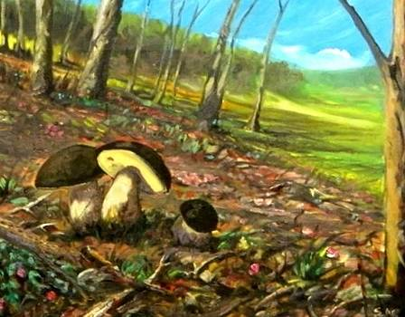 Funghi Nel Bosco by Sandro  Mulinacci