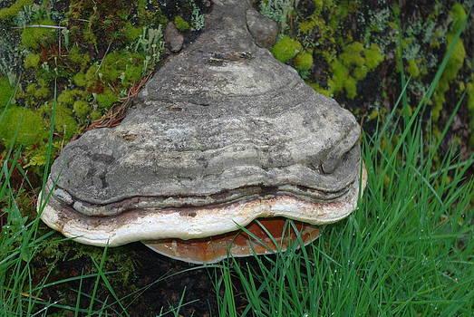 Fungus Among Us by Keith Nichols