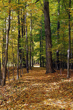 Furnace Run Fall by David Yunker
