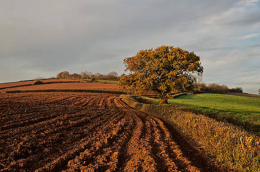 Furrows and Field by Pete Hemington
