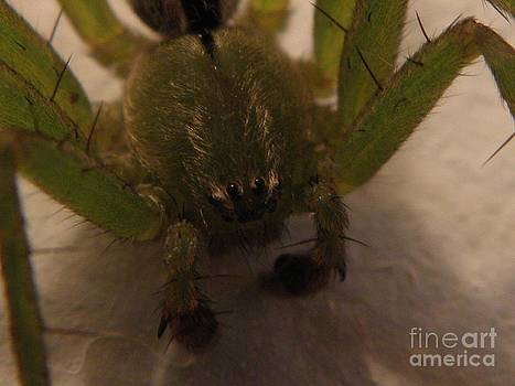 Furry Spider by Frances Hodgkins
