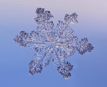 Tom Biegalski - Fused Snowflake