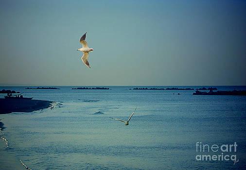 Gabbiani - Seagulls by Ze  Di