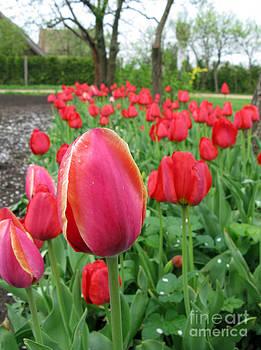 Gaden With Tulips by Ausra Huntington nee Paulauskaite