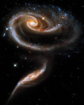Adam Romanowicz - Galactic Rose