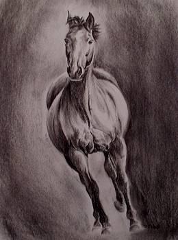 Gallop by Donna Teleis