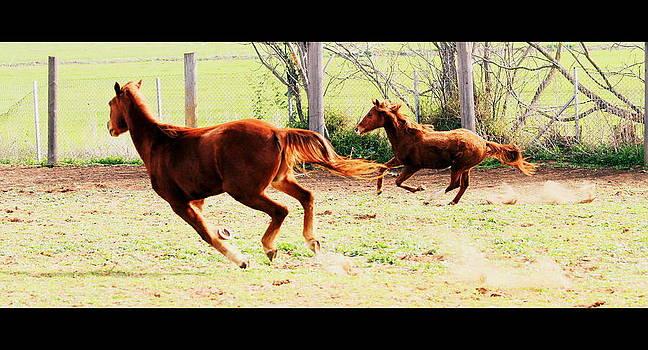 Galloping horses by Arie Arik Chen