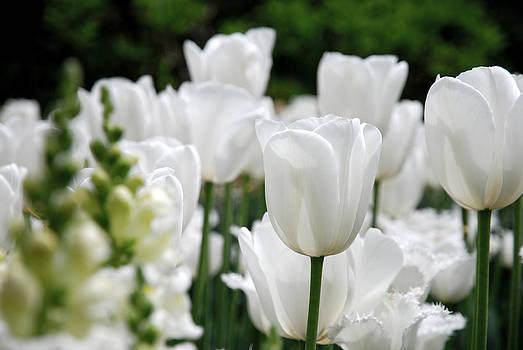 Garden Beauty by Jennifer Ancker