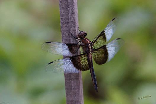 Mick Anderson - Garden Dragonfly