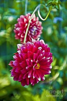 David Zanzinger - Garden Flowers Red Pink Getty Center