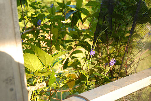 Garden Flowers by Yeram Reyes