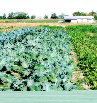 Garden Grow by Paulette Maffucci