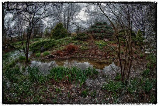 Garden Reflections by Kimberleigh Ladd