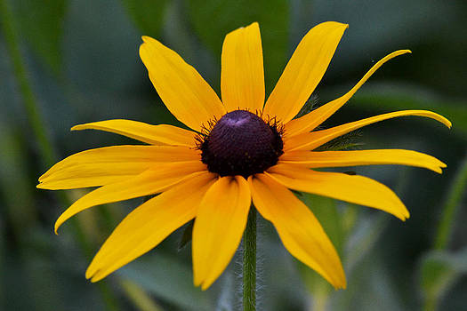 Garden Royalty by Kim Hymes