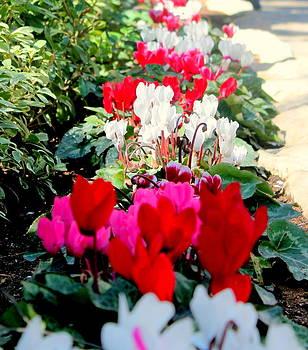 Garden Tomb's Flowers 1 by Jason Sentuf