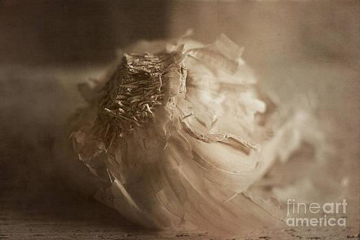 Elena Nosyreva - Garlic 1