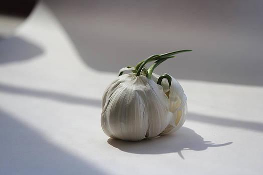 Garlic Clove 2 by Carrie  Godwin