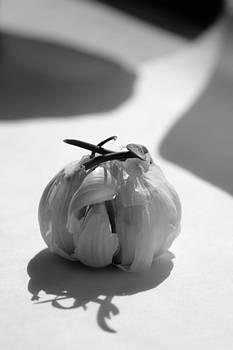 Garlic Cove B1 by Carrie  Godwin