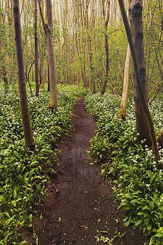 Svetlana Sewell - Garlic Path