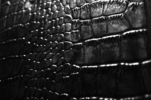 Gator by Anthony Cummigs